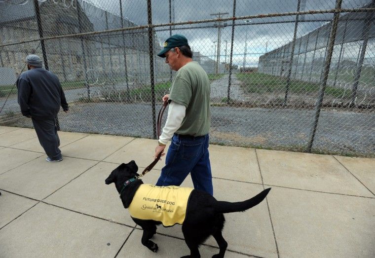 Kent Brewer, 61, and Trooper, walk toward the auditorium at Maryland Correctional Institution-Hagerstown. Brewer is among incarcerated veterans and other prisoners training service dogs for wounded service people. (Kim Hairston/Baltimore Sun)