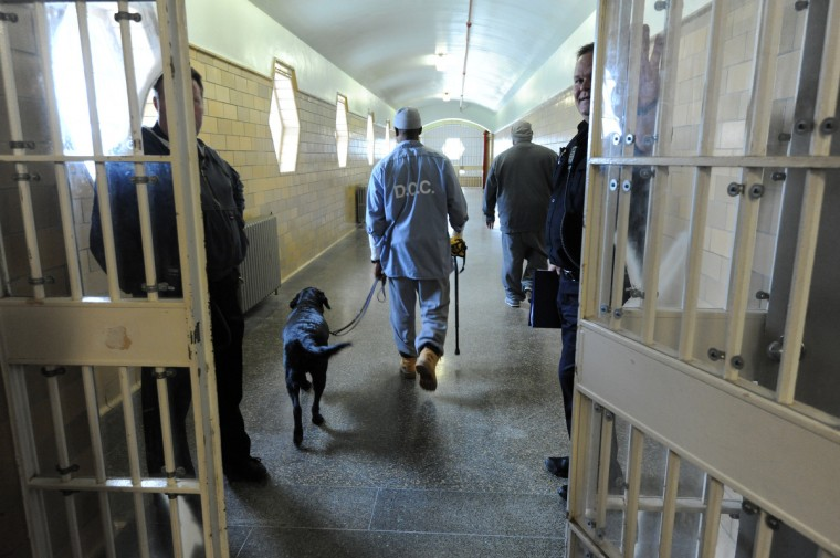 Dumplin' walks with his trainer, an inmate at Maryland Correctional Institution-Hagerstown. Several incarcerated veterans and other prisoners are training service dogs for wounded service people. (Kim Hairston/Baltimore Sun)