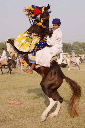 A member of the traditional Sikh religious warriors' Nihang Army performs on horseback on the occasion of 'Fateh Divas' in Amritsar on November 4, 2013. The Sikh celebration of the return of the sixth Guru Hargobind from detention in the Gwalior Fort known as Bandi Chhorh Divas, which coincides with Hindu festival of Diwali, marks the day Guru Hargobind had agreed to his release on the condition that the other fifty-two vassal kings who were detainees would also be released.(Narinder Nanu/AFP/Getty Images )