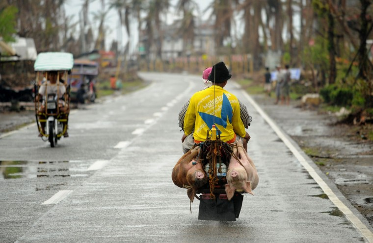 Motorists carry pigs tied on a motorcycle in Palo, Leyte province on November 28, 2013. The Philippines' economy expanded 7.0 percent year-on-year in the third quarter, but a series of storms curbed growth and a devastating typhoon this month will slow momentum further, the government said November 28. (NOEL CELIS/AFP/Getty Images)