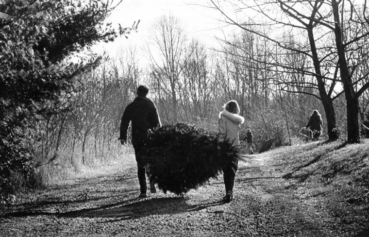 Joe and Donna Roberts, a newly married Timonium couple, hoist a tree they cut down at the Locksley Farm in Jacksonville on a cold winter afternoon in 1981, which will mark their first Christmas as a married couple. Photo by Jed Kirschbaum