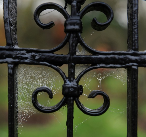 Drops of rain are caught on a spider web on an iron gate at Ladew Topiary Gardens. (Kim Hairston/Baltimore Sun)