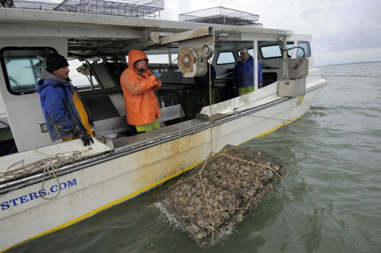 Left to right, Hector Meduena and Kevin Covey, of Chesapeake Gold Oysters, return an oyster cage to Tar Bay. (Kim Hairston/The Baltimore Sun)