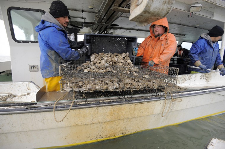 Left to right, Hector Meduena and Kevin Covey, of Chesapeake Gold Oysters, return oysters to a cage before lowering it into Tar Bay. (Kim Hairston/The Baltimore Sun)