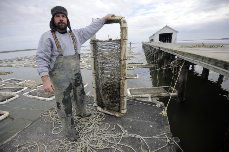 Kevin McClarren, general manager of the Choptank Oyster Co, has been selling farm raised oysters since 2005. (Kim Hairston/The Baltimore Sun)