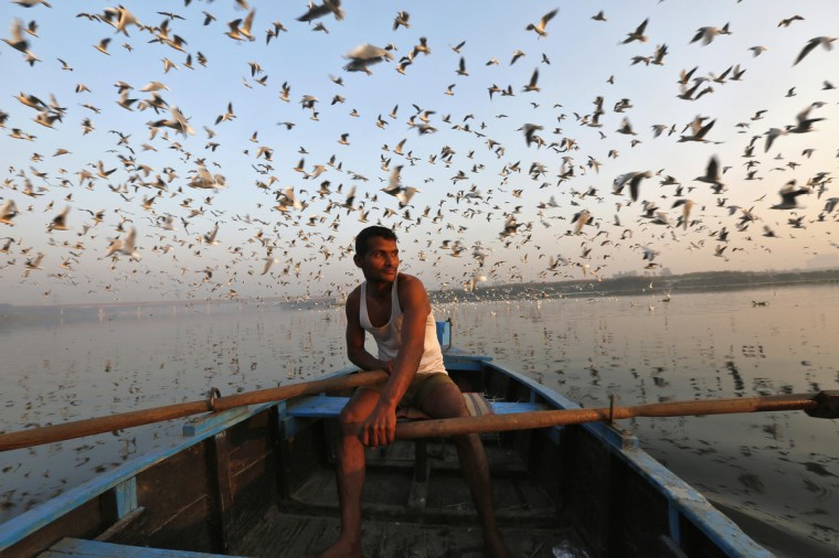 Migratory birds fly above a man rowing a boat in the waters of river Yamuna during early morning in old Delhi. (Mansi Thapliyal/Reuters)