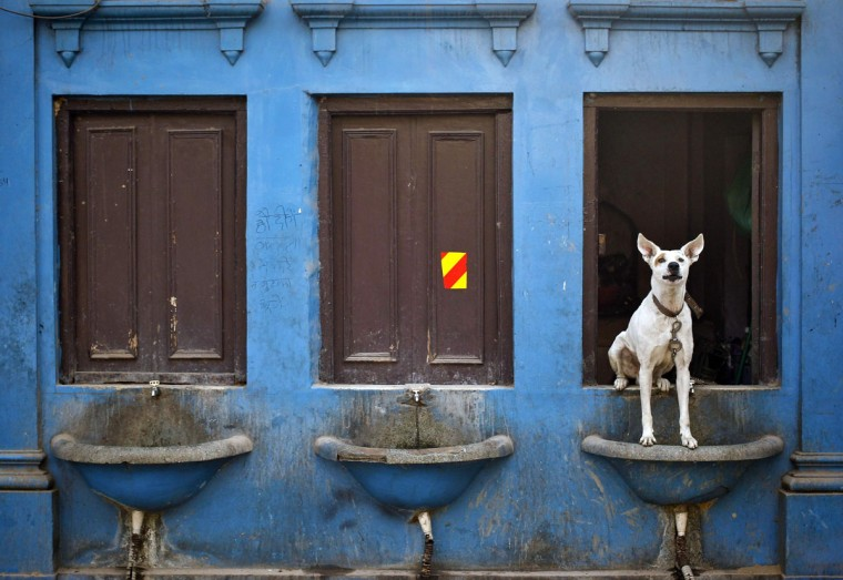 A dog sits over a drinking water basin along a road in the old quarters of Delhi November 15, 2013. (Anindito Mukherjee/REUTERS)