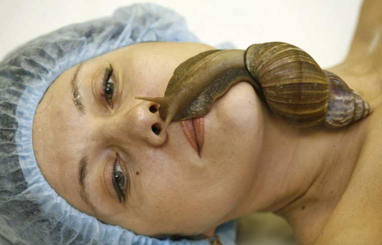 "A member of the ""Ranetka"" private family club takes a medical-cosmetic massage using the Achatina fulica snail, also known as the Giant African land snail, at the club in Russia's Siberian city of Krasnoyarsk. Snails' massage method, which is believed to speed up the regeneration of the skin and to eliminate wrinkles and scars, has become more popular among beauty salons and female health clubs of the city, according to the ""Ranetka"" club owner Yelena Baranchukova. (Ilya Naymushin/Reuters)"