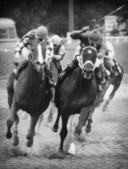 May 8, 1981 - Baltimore, MD - Codex (right) veers towards Genuine Risk at a crucial point in the running of the 19080 Preakness race. The resulting protest wound up in a courtroom long after the race was won. (Weyman Swagger/Baltimore Sun)