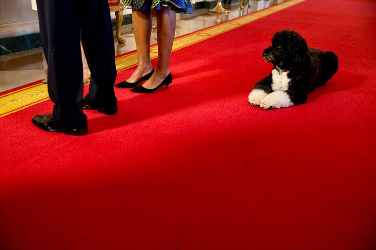 "Nov. 22, 2013 ""Bo waits as the President and First Lady participate in an interview with Barbara Walters in the Cross Hall of the White House."" (Official White House Photo by Pete Souza)"