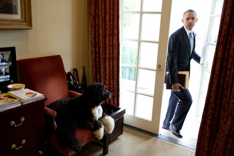 "Nov. 6, 2013 ""Bo was just hanging out in the Outer Oval Office when the President walked in to begin his day. Each morning, the President always enters through this door rather than the direct outside door to the Oval Office."" (Official White House Photo by Pete Souza)"