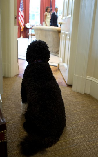 "Aug. 30, 2013 ""Seemingly trying to catch a look, Bo, the Obama family dog, sits outside the Oval Office as the President and First Lady participated in a promotion ceremony."" (Official White House Photo)"