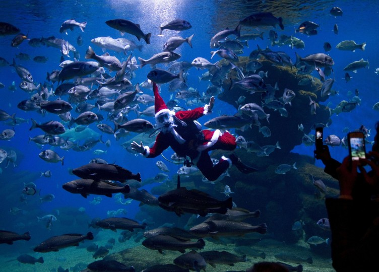 A diver wearing a Santa Claus costume swims among fish at the aquarium of Palma de Mallorca in Spain. (Jaime Reina/Getty Images)