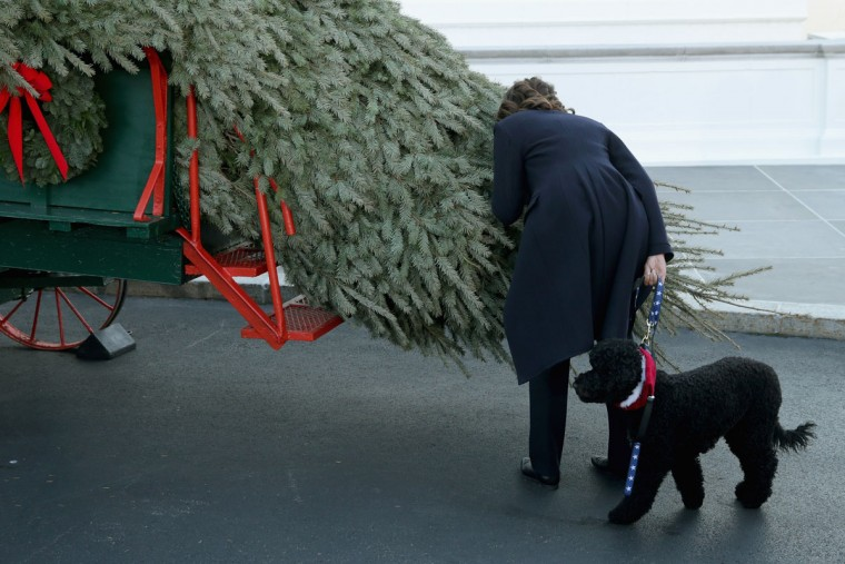 """First lady Michelle Obama stoops to smell the official White House Christmas Tree with her dog Sunny as it was delivered to the North Portico of the White House November 29, 2013 in Washington, DC. According to the White House, """"This year's White House Christmas Tree, which will be on display in the Blue Room, is an 18.5-foot Douglas Fir grown by Chris Botek, a second generation Christmas Tree Farmer from Crystal Spring Tree Farm in Lehighton, Pennsylvania."""" (Chip Somodevilla/Getty Images)"""
