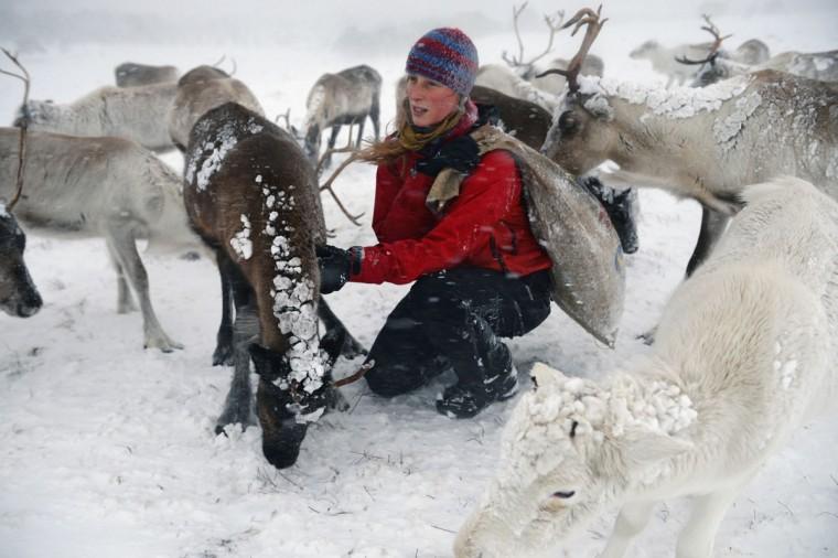 Britain's reindeer herd