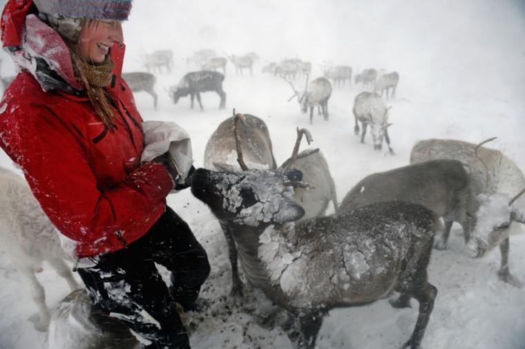 Eve Grayson, a reindeer herder of the Cairngorm Reindeer Herd, feeds the deer on Dec. 23, 2013 in Aviemore, Scotland. Reindeer were introduced to Scotland in 1952 by Swedish Sami reindeer herder, Mikel Utsi. (Jeff J Mitchell/Getty Images)