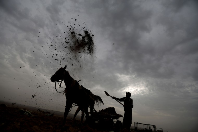 A Palestinian farmer works tossing compost at his field near the northern Gaza Strip refugee camp of Jabalia, on December 3, 2013. (Mohammed Abed/AFP/Getty Images)