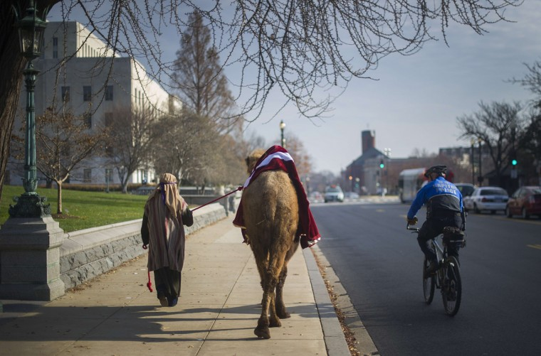 Kara Iden, a member of Faith and Action in the Nations Capital, is watched by a police officer as she leads camel to the Supreme Court to participate in a Live Nativity on Capitol Hill in Washington, DC, December 3, 2013. For the past several years, Faith and Action has sponsored the only Live Nativity procession seen on Capitol Hill. When actors portraying Mary, Joseph, and a cooing Baby Jesus, make their way down Constitution Avenue with a shepherd boy, three Wise Men, and a real live camel, a donkey, and a sheep in their wake. (Jim Watson/AFP)