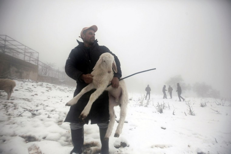 A Palestinian man carries a sheep on a farm during snowy weather on Mount Gerizim, near the West Bank city of Nablus, on December 12, 2013. (JAAFAR ASHTIYEH / AFP/Getty Images)