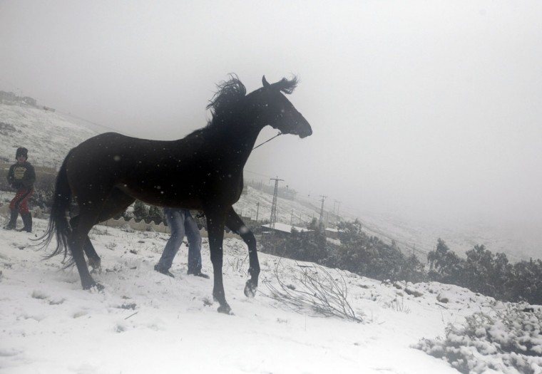 A Palestinian man struggles with a horse during snowy weather on Mount Gerizim, near the West Bank city of Nablus, on December 12, 2013. (JAAFAR ASHTIYEH / AFP/Getty Images)