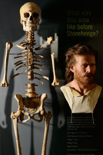 The skeleton of a neolithic man who was buried around 5,500 years ago in a long barrow 1.5 miles from the prehistoric monument of Stonehenge, a world heritage site, is displayed next to a reconstruction of the man's face at the new Stonehenge visitors centre, near Amesbury in south west England on December 11, 2013. Forensic evidence tells us that he is 25 40 years old, of slender build, born about 500 years before the circular ditch and banks, the first monument at Stonehenge, was built. Stonehenge's new visitor centre opens on December 18 in time for the winter solstice, hoping to provide an improved experience for the million tourists that flock annually to Britain's most famous prehistoric monument. (Leon Neal/AFP/Getty Images)