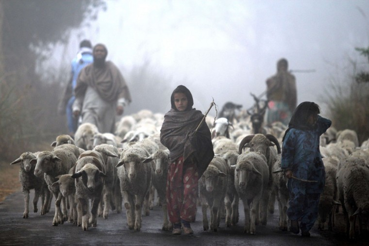 Young Indian Gujjar nomads walk with their flock through thick fog on the outskirts of Jammu on December 19, 2013. Northern India continues to face below average temperatures with dense fog affecting flights and trains. (Strstrdel/AFP/Getty Images)