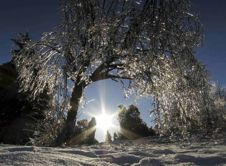 An ice encrusted tree glistens in the setting sun in Earl Bales Park following an ice storm in Toronto, December 24, 2013. (REUTERS/Gary Hershorn)