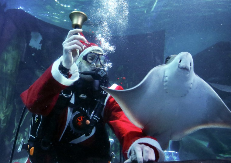 A diver dressed as Santa Claus rings the bell next to a ray inside a fish tank at the Sea Life aquarium in Berlin, December 3, 2013. (Reuters/Fabrizio Bensch)