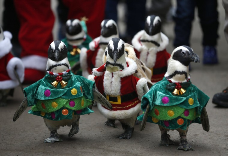 Visitors look at penguins wearing Santa Claus (in red) and Christmas tree (in green) costumes during a promotional event for Christmas at an amusement park in Yongin, south of Seou. (Kim Hong-Ji/Reuters)