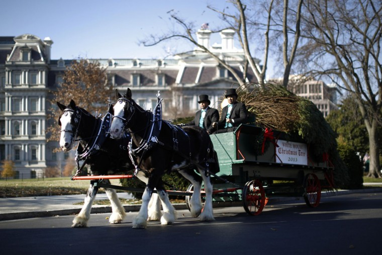The official White House Christmas tree arrives on a horse-drawn carriage at the North Portico of the White House in Washington, November 29, 2013. The 18.5-foot Douglas Fir was grown by Chris Botek, a second generation Christmas Tree Farmer from Crystal Spring Tree Farm in Lehighton, Pennsylvania. (Jason Reed/REUTERS)