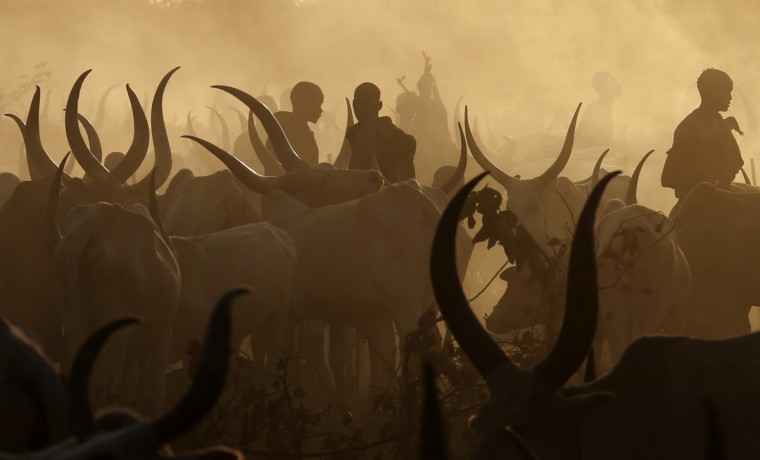 Men from Dinka tribe stand amongst cows in a Dinka cattle herders camp near Rumbek, capital of the Lakes State in central South Sudan December 14, 2013. Picture taken December 14, 2013. (Goran Tomasevic/Reuters)