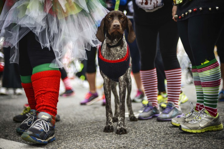 A dog wears a Christmas sweater at the Ugly Sweater Run at National Harbor in Fort Washington, Maryland December 21, 2013. (REUTERS/James Lawler Duggan)