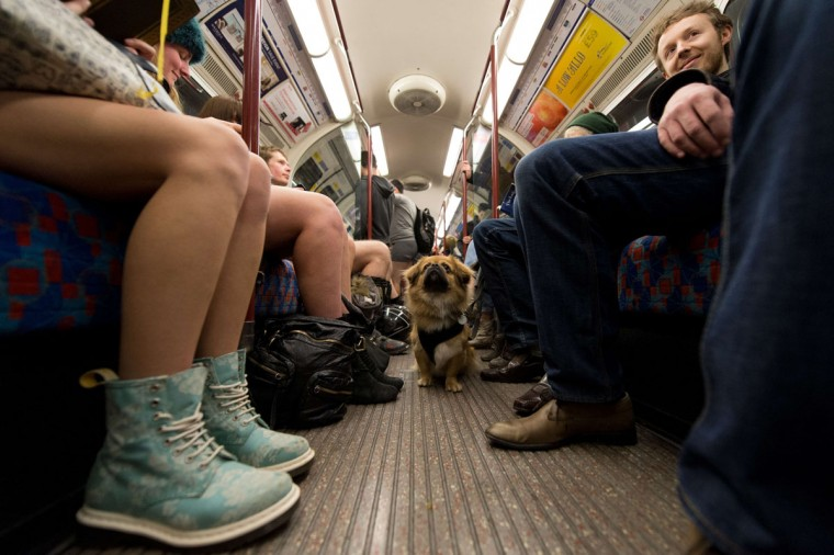 "A dog looks on as participants in the13th annual International ""No Pants Subway Ride"" travel on a London underground train in London, on January 12, 2014. (Leon Neal/AFP Getty Images)"
