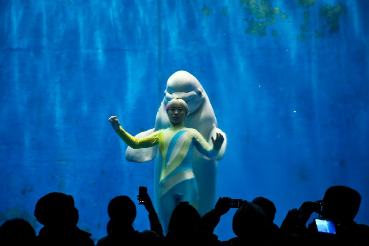 White whales and their trainers present a show for visitors at Harbin Pole Aquarium on January 7, 2014 in Harbin, China. The Aquarium is one of the tourist highlights of Harbin, attracting domestic and foreign tourists each year. (Lintao Zhang/Getty Images)