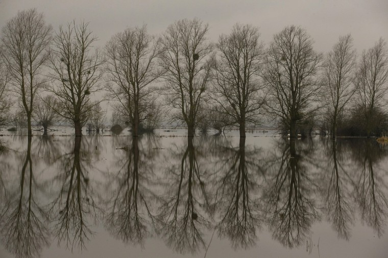 Trees are reflected in flood waters on the Somerset Levels near Langport in Somerset, England. As weather forecasters predict more stormy weather, many villages on the Somerset Levels have faced weeks of flooding with the village Muchelney cut off because of flooded roads for almost a month. (Matt Cardy/Getty Images)