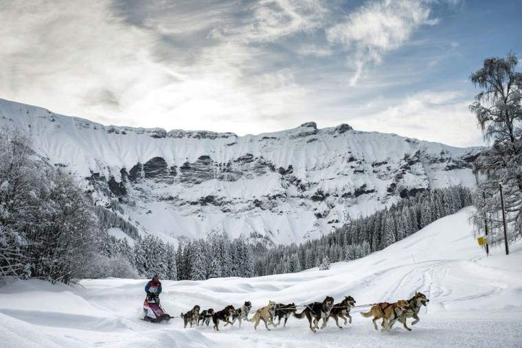 Sledding race: A file picture taken on January 18, 2013 shows a musher competing in Megeve, in the French Alps during the departure of a stage of the Grande Odyssee sledding race. The world's top 30 mushers and 400 dogs will compete over 1,000 km in the French Alps during the 10th anniversary of the Grande Odyssee sledding race, which is scheduled to begin on January 11. (JEFF PACHOUD/AFP/Getty Images)