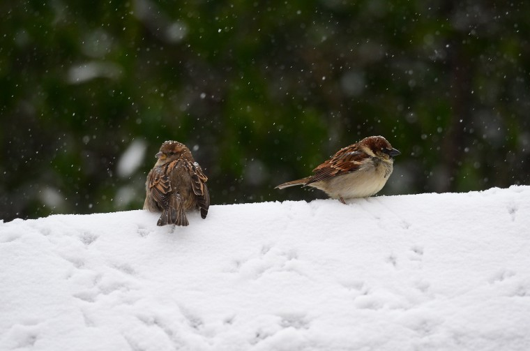 Birds sit on a wall during a snow storm in New York, January 22, 2014. In New York, a storm alert was issue for noon (1700 GMT) Tuesday to 6:00 am (1100 GMT) Wednesday with as much as a foot (30 centimeters) forecast for the metropolitan region. (Emmanuel Dunand/AFP/Getty Images)