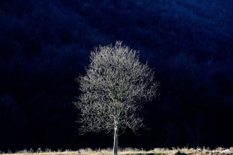 A view of a tree during an unusually warm winter day near the town of Velingrad on January 22, 2014. (Dimitar Dilkoff/AFP/Getty Images)