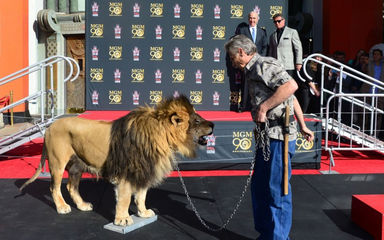 Film star Sylvester Stallone(Rear-R) and MGM Chairman and CEO Gary Barber(Rear) watch from the stage as Leo the Lion steps onto a cement block for his paw prints during a ceremony at the TCL Chinese Theater celebrating the Metro-Goldwyn-Mayer studio's 90th anniversary on January 22, 2014 in Hollywood, California. (Frederic J. Brown/AFP/Getty Images)