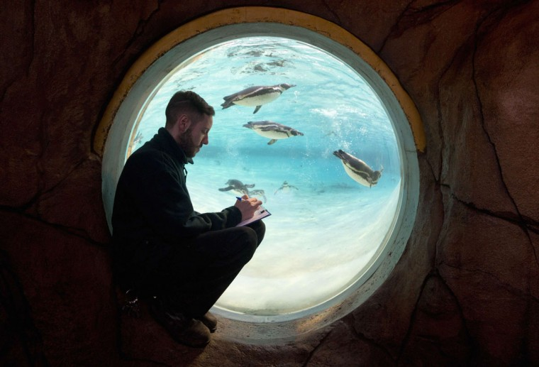 A zoo worker counts penguins during a photocall at London Zoo in London January 2, 2014. The annual stocktake is a compulsory count, with the results data shared with zoos around the world and used to manage the international breeding programmes for endangered animals. (REUTERS/Neil Hall)