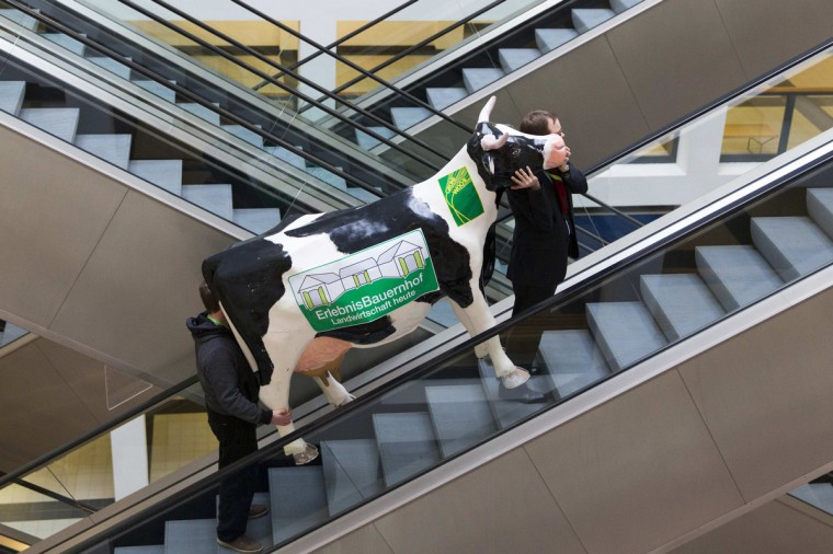 "Men carry a fake cow while riding an escalator during preparations for the Green Week international food, agriculture and horticulture fair in Berlin. Estonia is the partner country of this year's trade fair. The writing reads: ""Adventure Farm. Agriculture Today. "" (Thomas Peter/Reuters)"