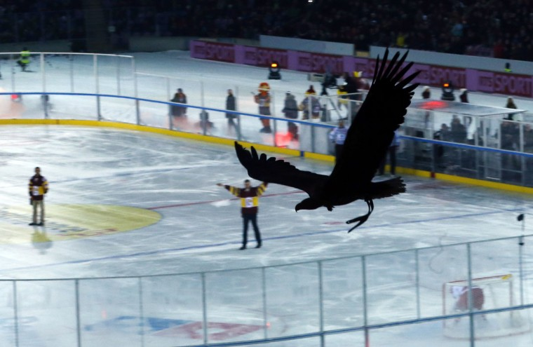 An eagle named Fletcher, the Geneve Servette HC mascot, flies above spectators before the Winter Classic Swiss Championship Ice Hockey match between Geneve Servette and Lausanne HC at the Stade de Geneve in Geneva January 11, 2014. (REUTERS/Denis Balibouse)
