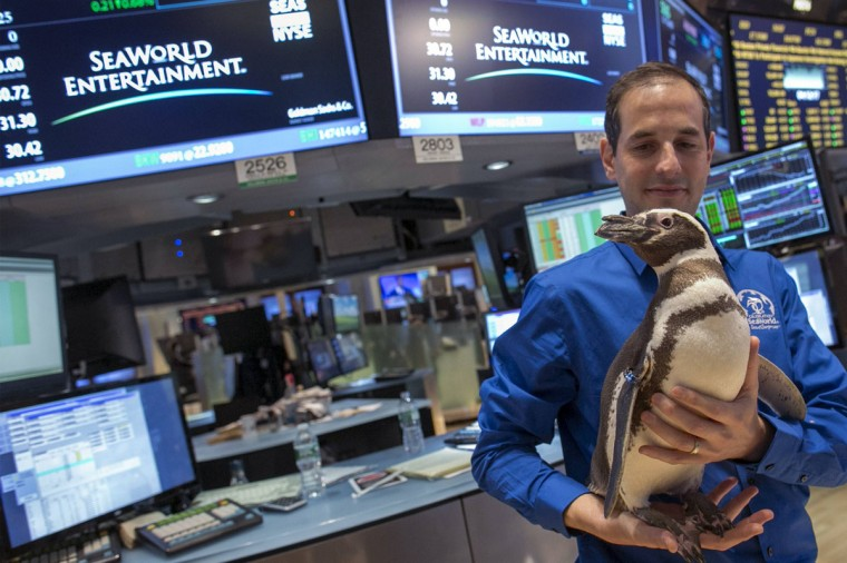 """Pete the Penguin"" of SeaWorld Entertainment is carried by a handler on the floor of the New York Stock Exchange January 15, 2014. Sea World celebrated it's 50th anniversary by ringing the closing bell at the NYSE. (REUTERS/Brendan McDermid)"