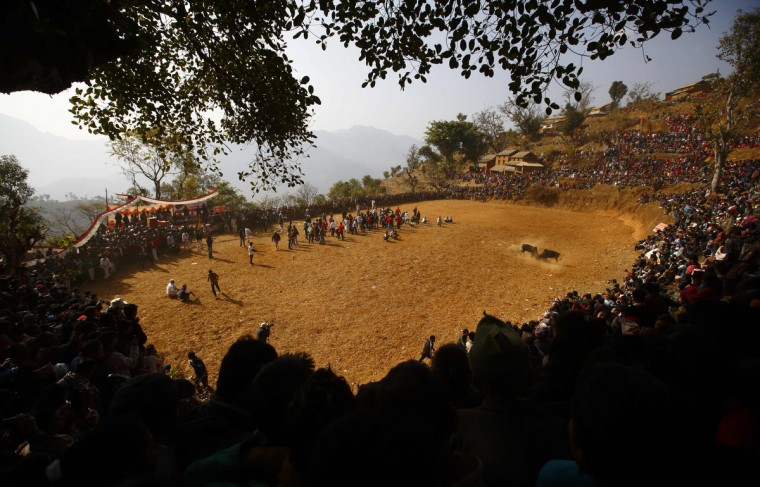Villagers gather around a field as bulls fight during the Maghesangranti festival at Talukachandani village in Nuwakot district near Kathmandu. The village organizes the bullfight during the Maghesangranti festival that commemorates the start of the holy month of Magh, ushering in the coming of warmer weather and longer days. (Navesh Chitrakar/Reuters)