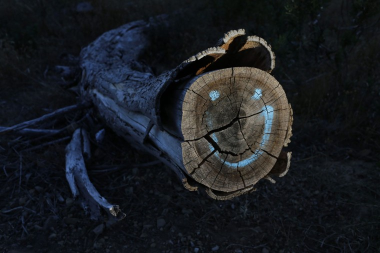 Graffiti marks the stump of a tree felled as part of a plan to remove alien vegetation and reduce fire risks in Cape Town's Table Mountain National Park, January 27, 2014. The city's iconic backdrop is rich in floral biodiversity and forms part of the Cape Floral Kingdom World Heritage Site. Picture taken January 27, 2014. REUTERS/Mike Hutchings