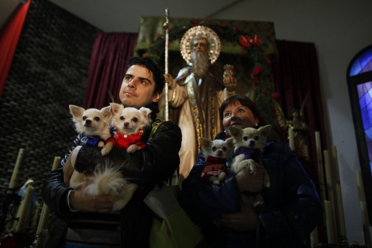 People pose for a photo with their dogs next to a statue of San Anton (rear), Spain's patron saint of animals, after a priest blessed their pets inside San Anton church in Churriana, near Malaga, southern Spain, January 17, 2014. Pet owners bring their animals to be blessed every year on the day of San Anton. REUTERS/Jon Nazca