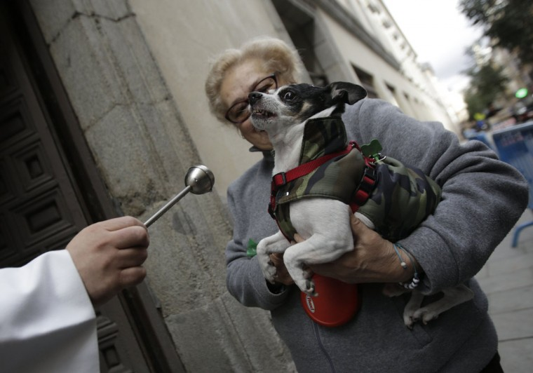 A priest blesses a dog outside Madrid's San Anton Church January 17, 2014. Hundreds of pet owners bring their animals to be blessed every year on the day of San Anton, Spain's patron saint of animals. (REUTERS/Andrea Comas)