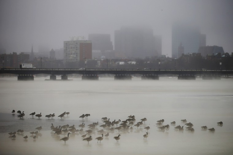 Birds gather on the partially frozen Charles River in front of the Boston skyline during winter in Cambridge, Massachusetts January 6, 2014. (Brian Snyder/Reuters)
