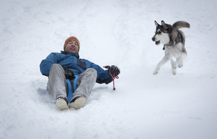 A man rides a sled on Cedar Hill as a dog chases him in Central Park in New York, January 3, 2014. A major snowstorm producing blizzard-like conditions hammered the northeastern United States on Friday, causing more than 1,000 U.S. flight delays and cancellations, paralyzing road travel, and closing schools and government offices. (REUTERS/Carlo Allegri)