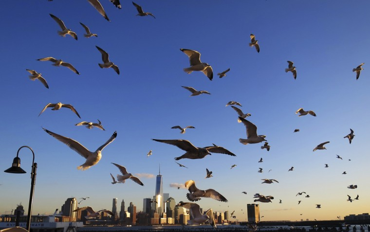Seagulls fly past New York's Lower Manhattan and One World Trade Center next to the Hudson River as seen from Hoboken, New Jersey. (Gary Hershorn/Reuters)